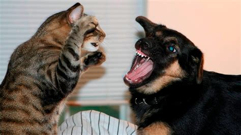 Cat And Dog Funny Cats And Dogs Part 7 Funny Cats Vs Dogs Funny