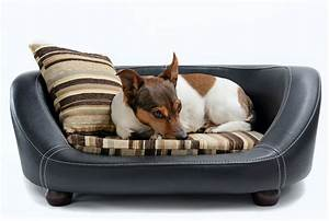 These, 6, Luxury, Pet, Beds, Will, Make, You, Wish, You, Were, A, Pet