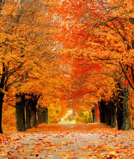 October Glory Red Maple Trees For Sale  Fast Growing Trees. Living Room Setups For Apartments. Small Country Living Room Ideas Pinterest. Living Room With 2 Doors. Easy Living Room Decorating Ideas. High Gloss Modular Living Room Furniture. Living Room Designs Designs. Living Room Arrangements With Corner Fireplace. Qatar Living Room For Rent In Bin Omran