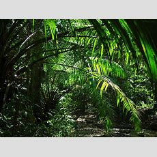 Walking Through The Jungle What Do We See First