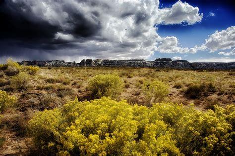 images landscape tree nature grass horizon