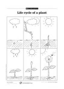 Plants Worksheets Gallery For Gt Stages Of Plant Growth For Worksheets
