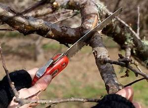 A Beginner U0026 39 S Guide To Pruning Fruit Trees