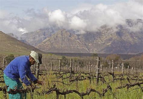 Cilvēkiem, kuri palīdz radīt slavenos Dienvidāfrikas vīnus ...