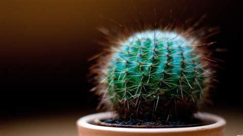 cactus picture  mitchbiucannon  greatest dof