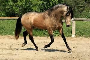 Dappled sooty buckskin | Animals (but mostly horses ...