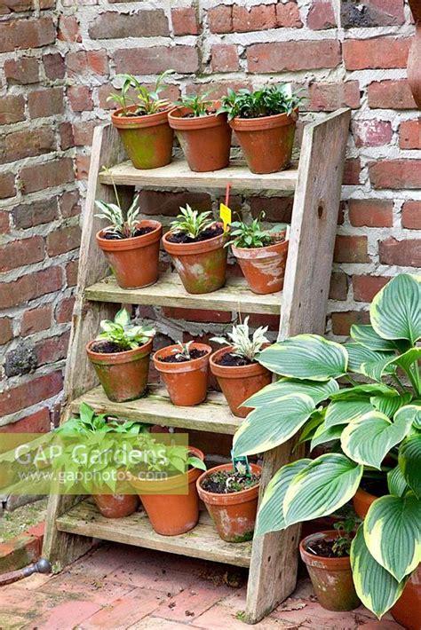 gap gardens step ladder plant stand image
