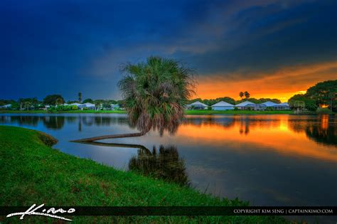 palm gardens sunset royal stock photo