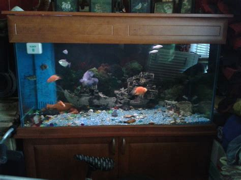 decorations big fish tanks  sale  exciting
