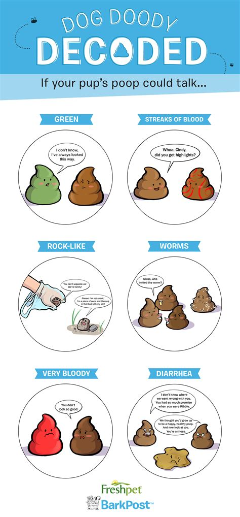 What Does The Color Of Your Dogs Poop Mean Dog