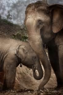 Thailand Elephant Love