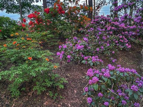 Rododendru dārzs - Visit Priekuļi
