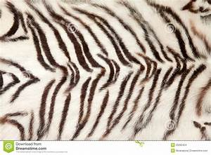 White Tiger Fur Background Stock Images - Image: 25092424