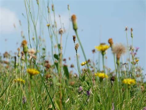 prato fiorito montello passeggiata dal santuario all osservatorio re sul montello