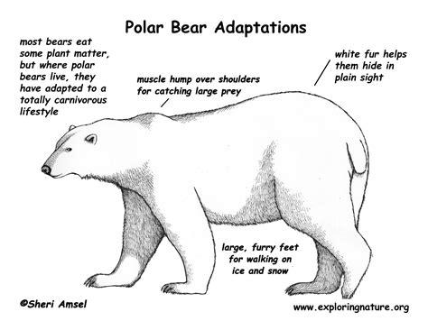 Adaptations of Desert Animals