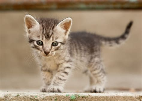 kitten names 10 most popular kitten names