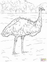 Emu Coloring Pages Realistic Printable Drawing Animals Animal Bird Supercoloring Birds Australia Australian Drawings Print Super Adult Ausmalbilder Paper Parakeet sketch template