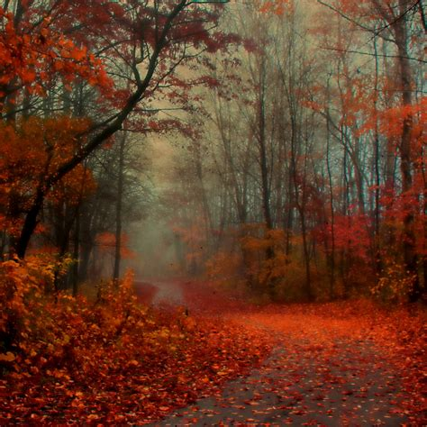 Fall Backgrounds by Free Fall Wallpaper For Gallery