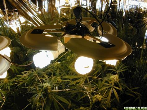 can you use a flood light to grow plants can i use a 60 watt a19 plant light bulb