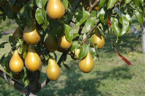 time  plant fruit trees heres