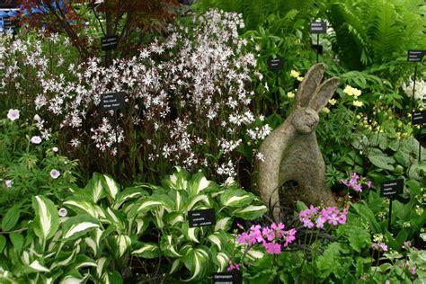 garden bushes harveys garden plants