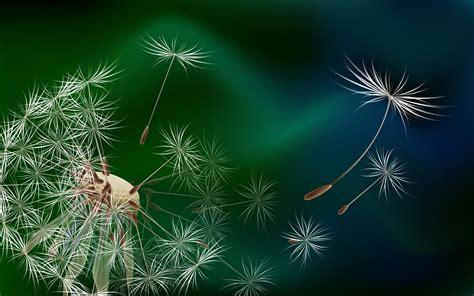 Dandelion Hd Wallpapers
