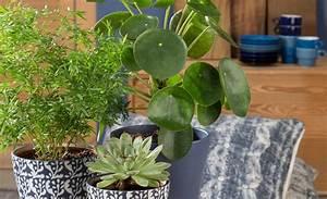 Pflanzen In Der Wohnung : warum zimmerpflanzen in jeder wohnung immer sinnvoll sind ~ A.2002-acura-tl-radio.info Haus und Dekorationen