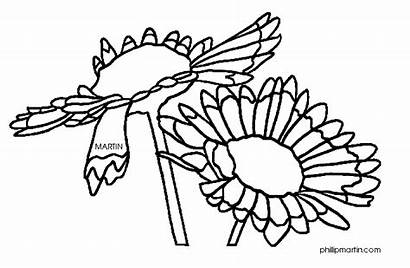 Blanket Flower Clipart Oklahoma Indian Clipartpanda Coloring