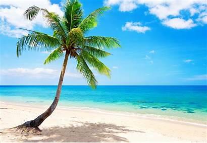 Tropical Beach Ocean Sea Paradise Palm Coast