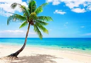 Palm paradise emerald ocean tropical coast blue beach sea ...