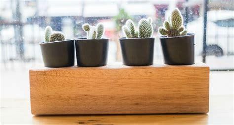 vasi per piante fai da te come creare dei vasi fai da te per le piante grasse