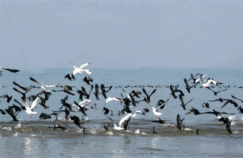 why do birds migrate pet attack