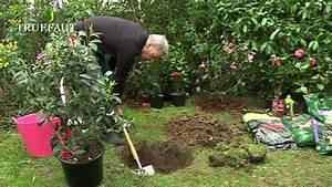 Comment Planter Un Camélia : comment planter des fleurs dans son jardin id es d coration id es d coration ~ Melissatoandfro.com Idées de Décoration