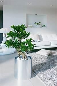 Feng Shui Einrichten : feng shui pflanzen f r harmonie und positive energie im wohnraum ~ Indierocktalk.com Haus und Dekorationen