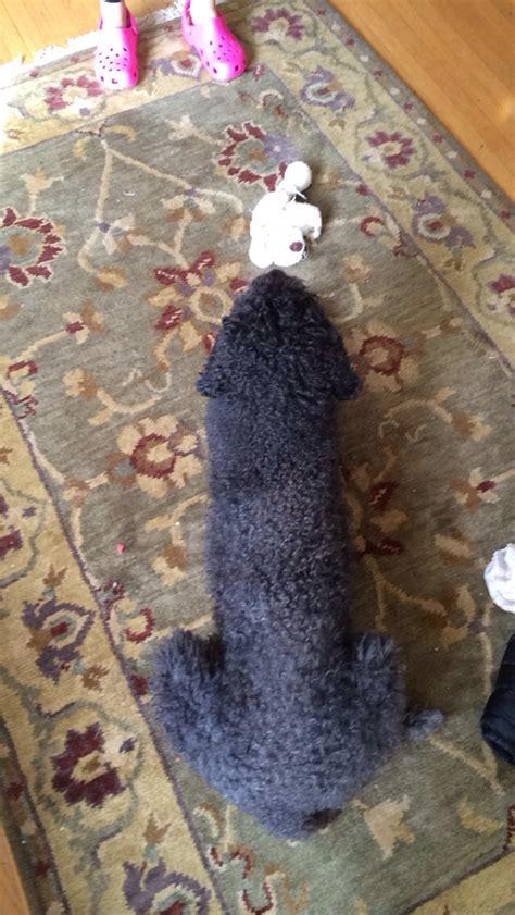 unfortunate dog photo   day  poke