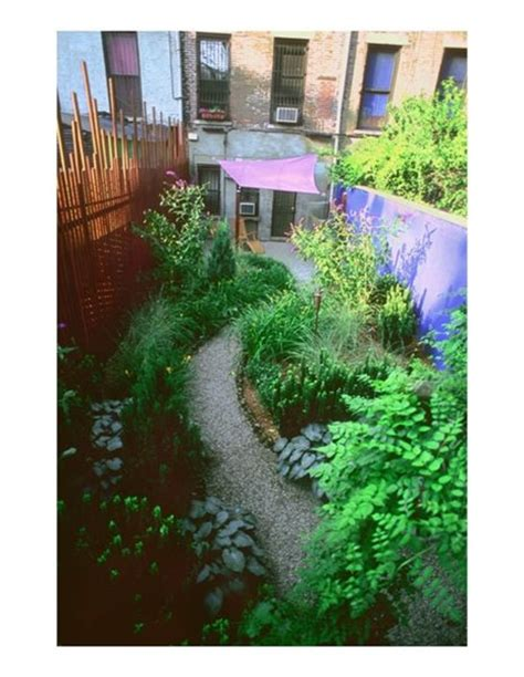 bamboo plants nyc designing with bamboo gallery garden design