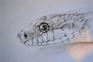 Free Snake Drawing, Download Free Clip Art, Free Clip Art ...