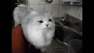 Cat And Water GIFs Find Share On GIPHY
