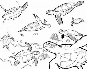 Sea Turtle Coloring Pages - Bestofcoloring.com