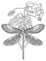 Coloring Pages Dragonfly Mandala Adult Dragonflies Flower Animal Zentangle Rocks Adults Printable Colouring App Colour Lds Books Zentangles sketch template