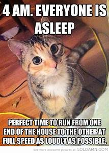 Funny Kitten Quotes. QuotesGram