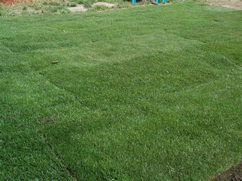 how to put in a new lawn how to remove old sod and lay new sod how tos diy