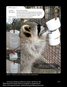 stacked pvc cap feeder  ring tailed lemur  saint