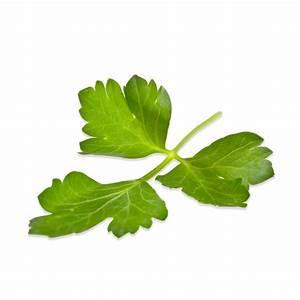 Fresh Italian Parsley Online (Flat Leaf Parsley) | Marx Foods