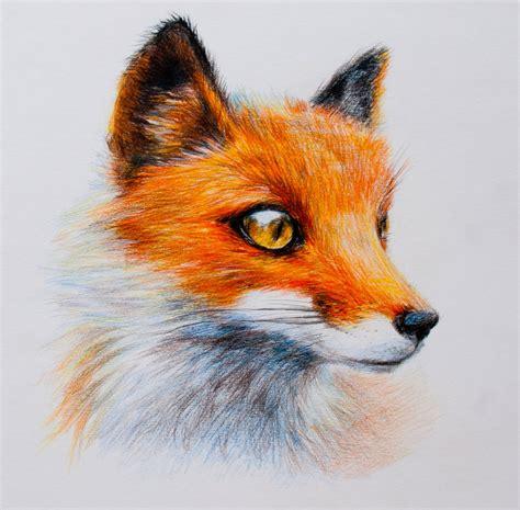 fox colors fox color pencils by nyan on deviantart