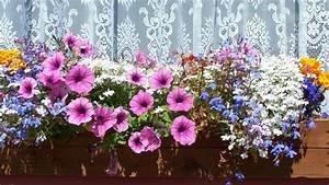 Solarstecker Für Blumenkästen : blumenk sten bepflanzen tipps sat 1 ratgeber ~ Markanthonyermac.com Haus und Dekorationen