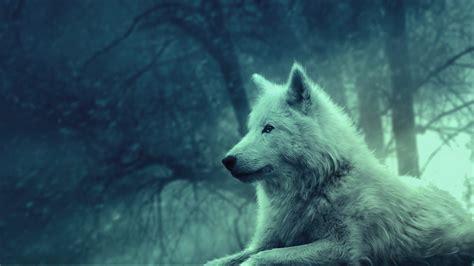 hd hintergrundbilder wolf weiss wald baeume desktop hintergrund