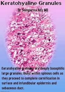 Keratohyaline Granules - Humpath Com