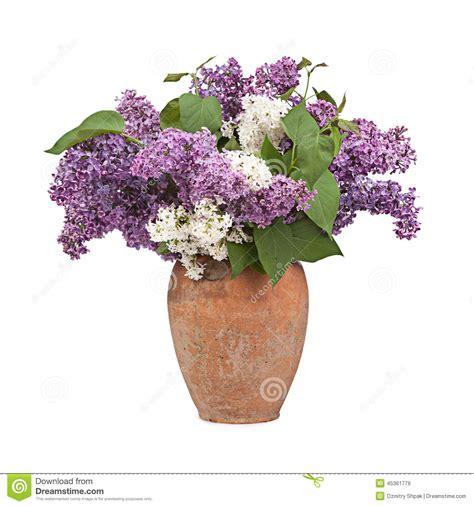 Tulpenstrauß In Vase by Blumenstrau 223 Einer Flieder Im Keramischen Vase Auf Wei 223