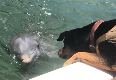 dog   friends  dolphin    sea